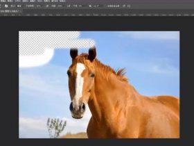 教程17章:Photoshop橡皮擦工具【28分钟】